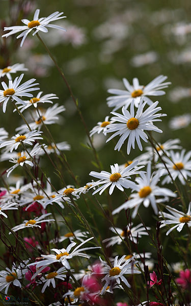 Flowers_KOCIS_Korea_Sancheong_Traditional_Medicine_EXPO_13